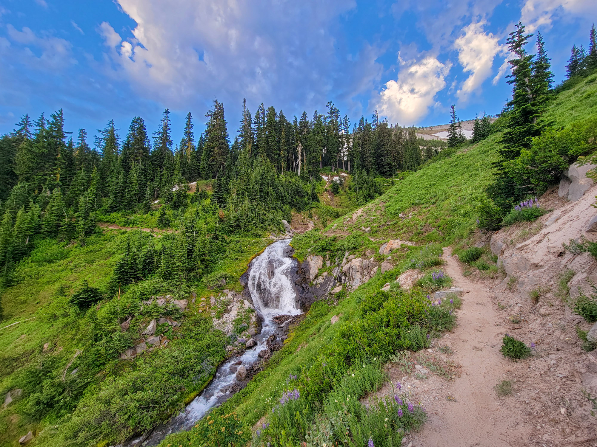 TimberlineTrailJuly (14)