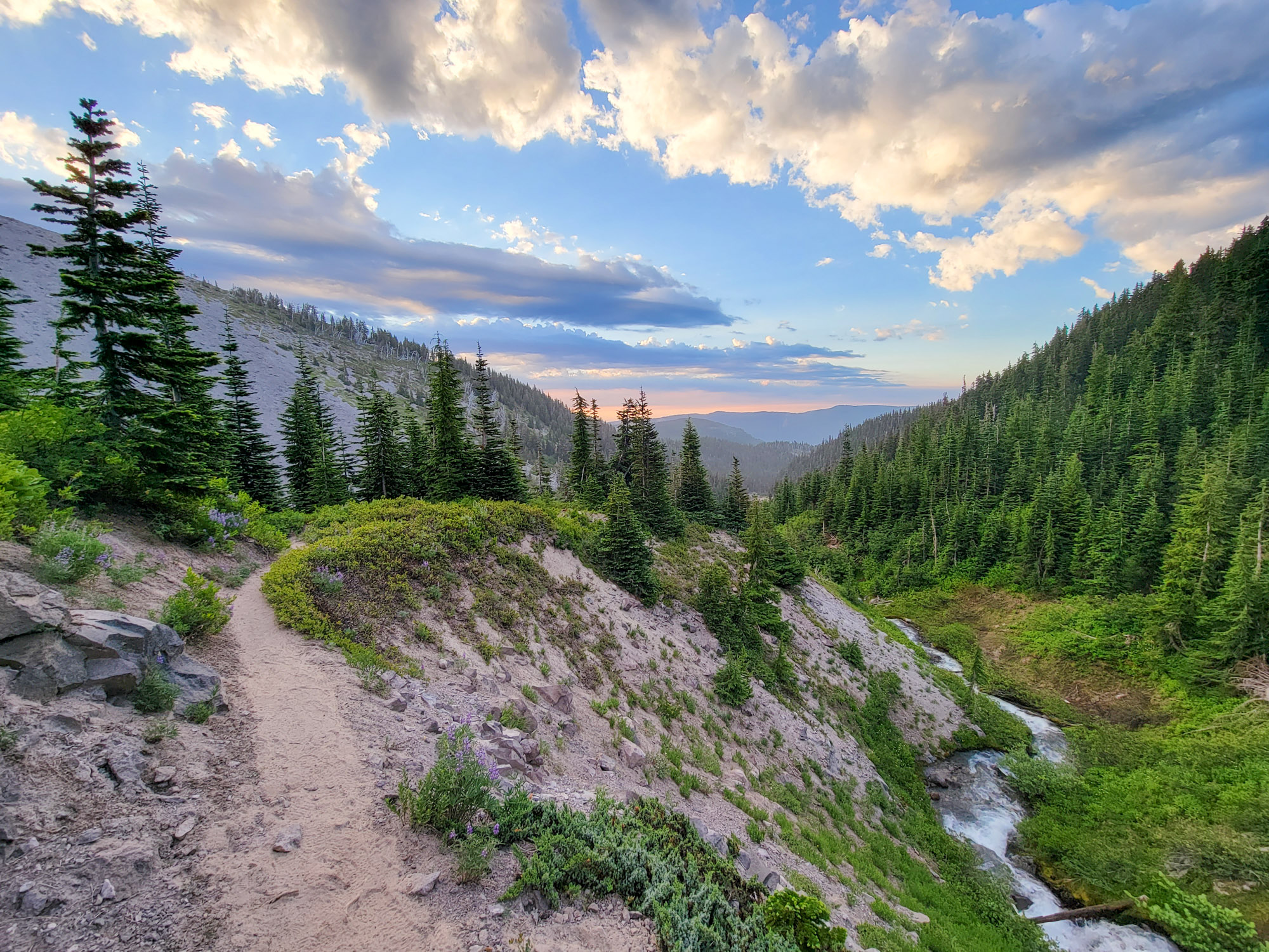 TimberlineTrailJuly (15)