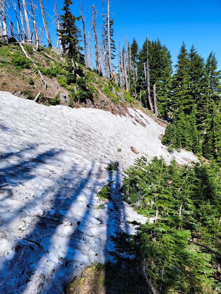 TimberlineTrailJuly (45)