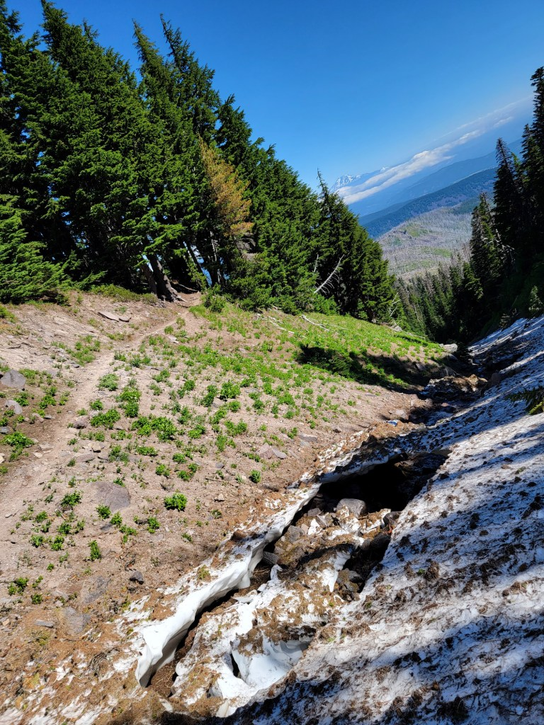 TimberlineTrailJuly (46)