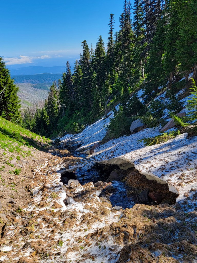 TimberlineTrailJuly (48)