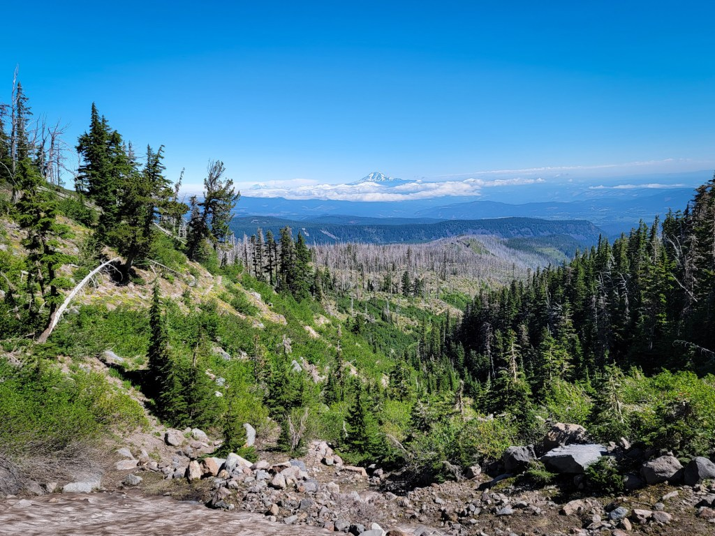 TimberlineTrailJuly (49)