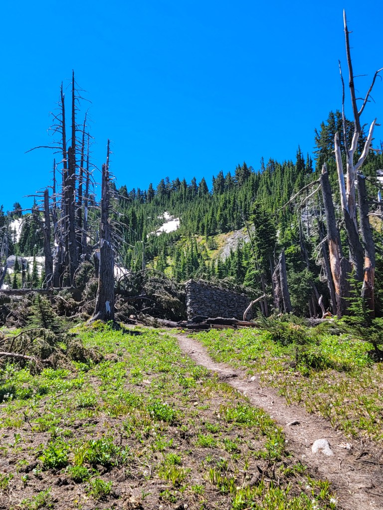 TimberlineTrailJuly (60)