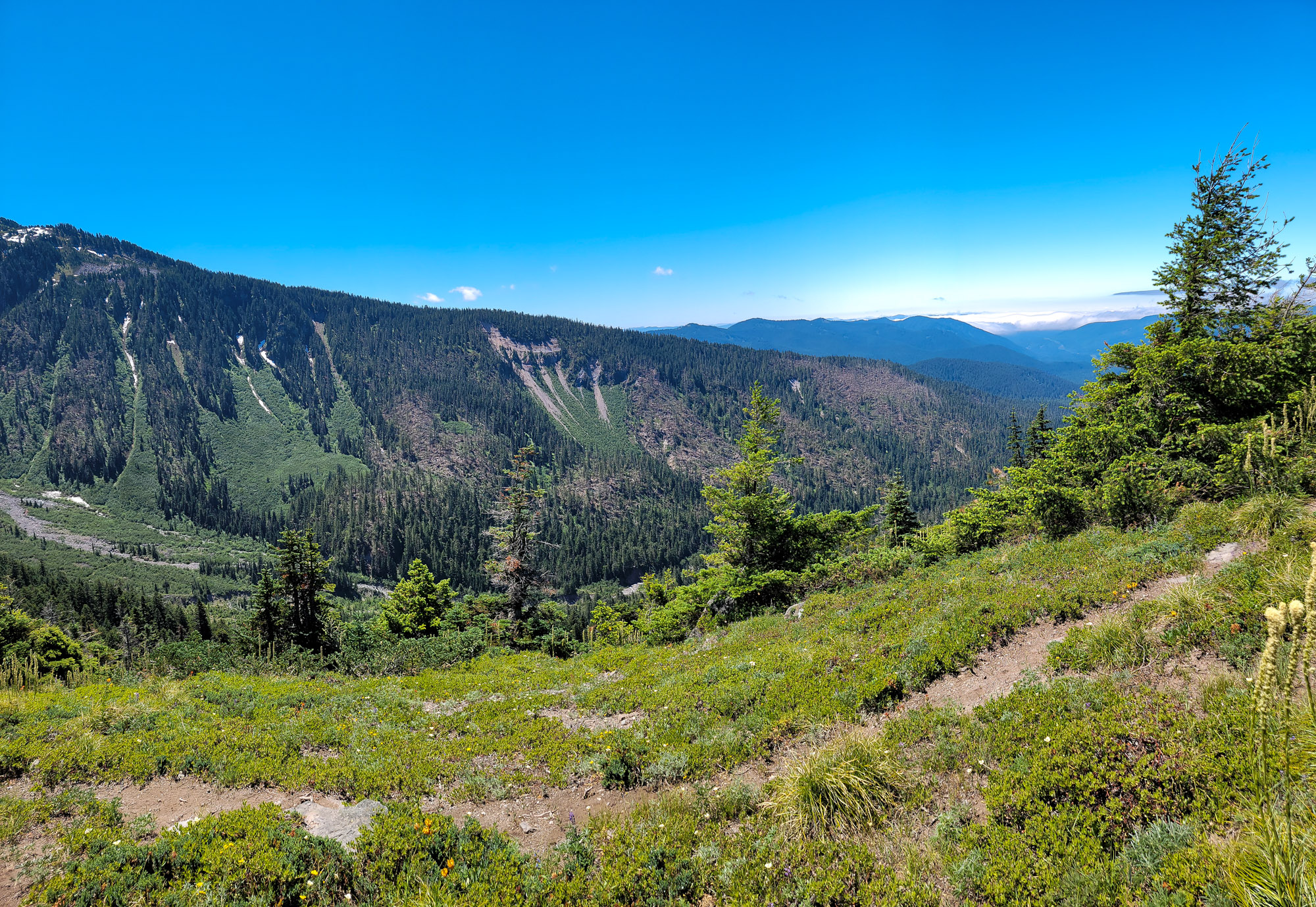 TimberlineTrailJuly (62)
