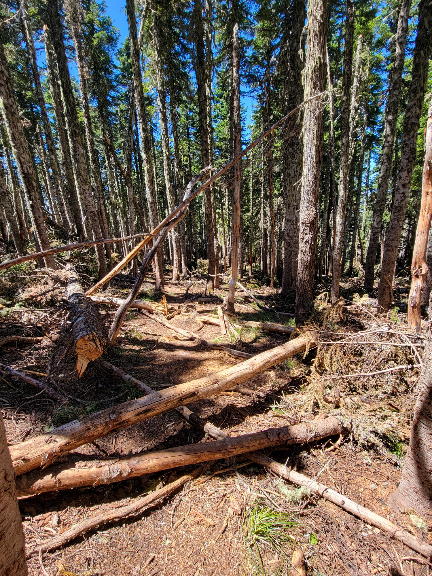 TimberlineTrailJuly (63)