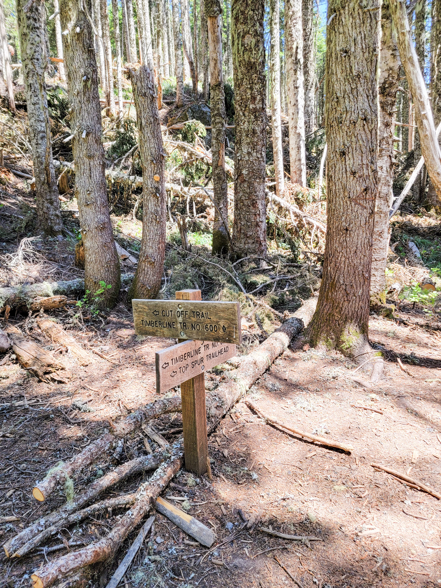 TimberlineTrailJuly (66)