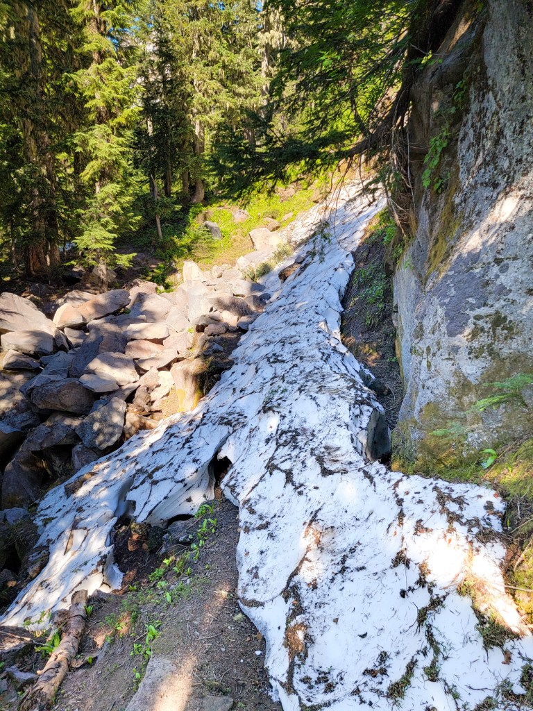 TimberlineTrailJuly (79)