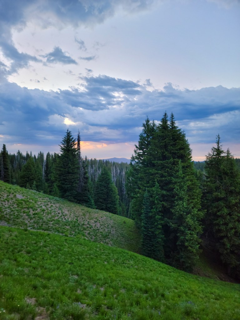TimberlineTrailJuly (8)
